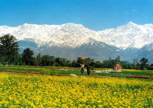 Tourists-in-Himachal-Pradesh